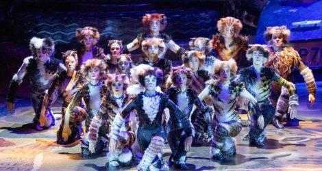 CATS - Credits: VBW - Deen van Meer